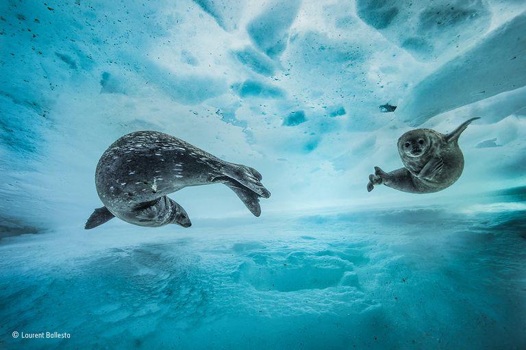 Estas hermosas fotos hablan alto y claro para la vida silvestre