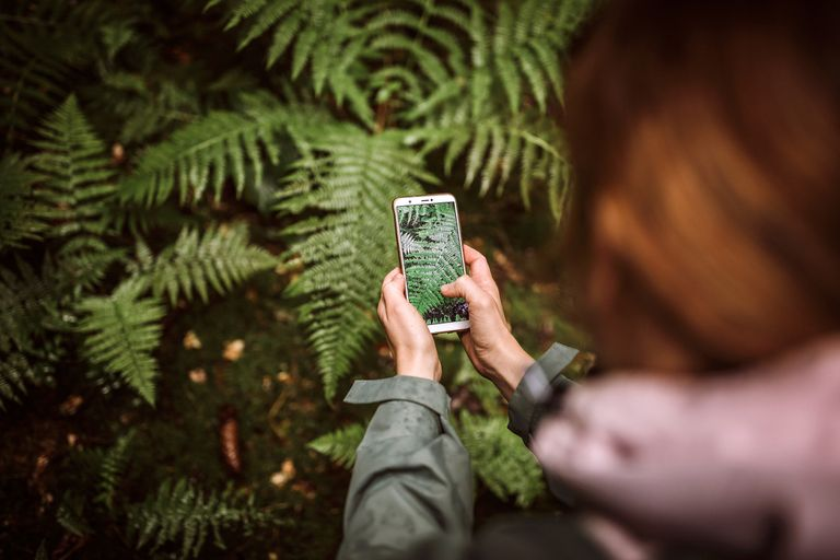 Woman taking photo of fern in forest