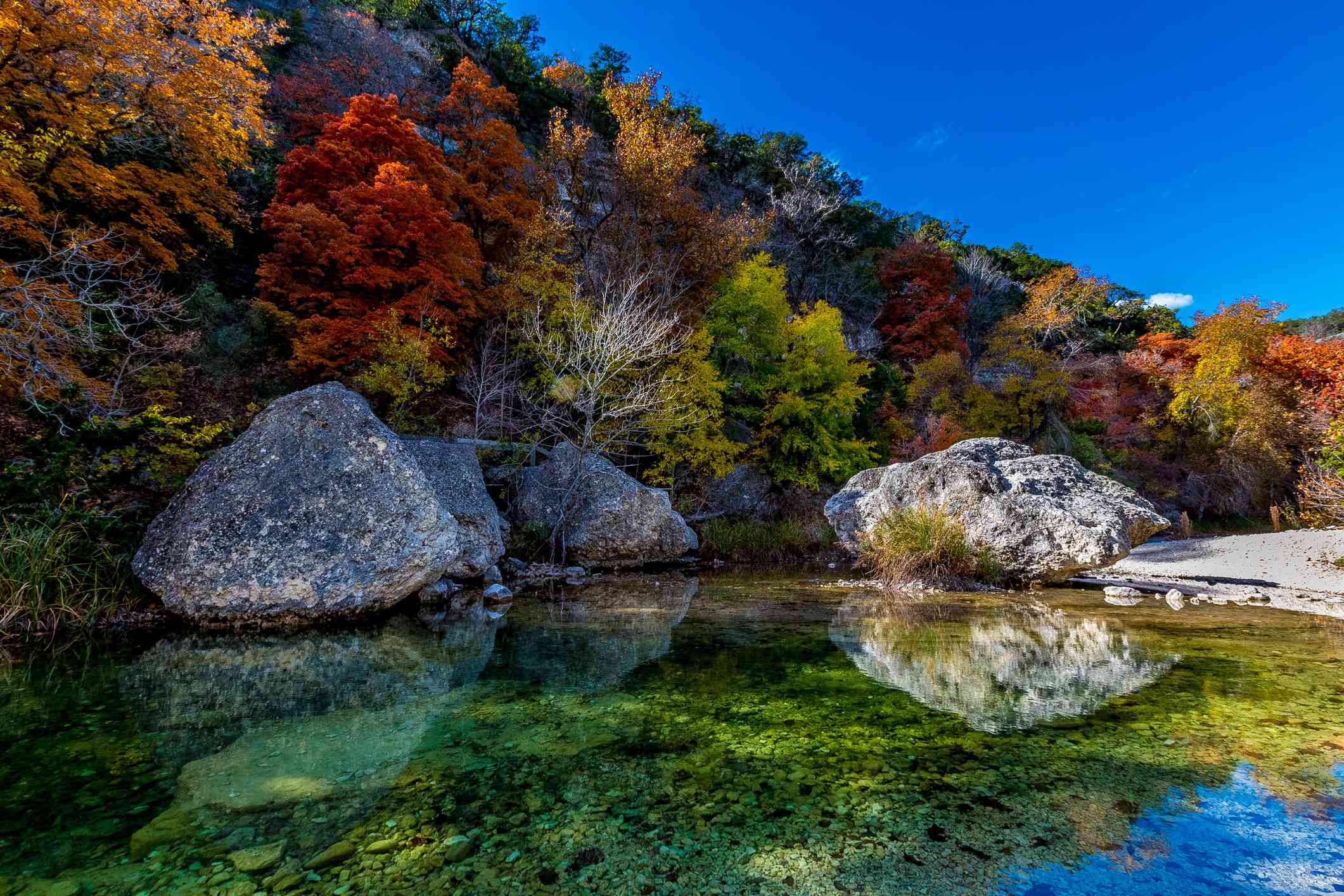 Crystal Clear Pool surrounded by several large boulders on Sabinal River with a lush forest of trees in bright fall foliage above at Lost Maples State Park, Texas