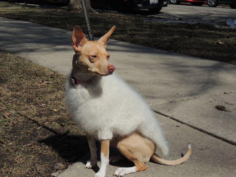 ¿Usarías un suéter hecho con el pelo de tu perro?
