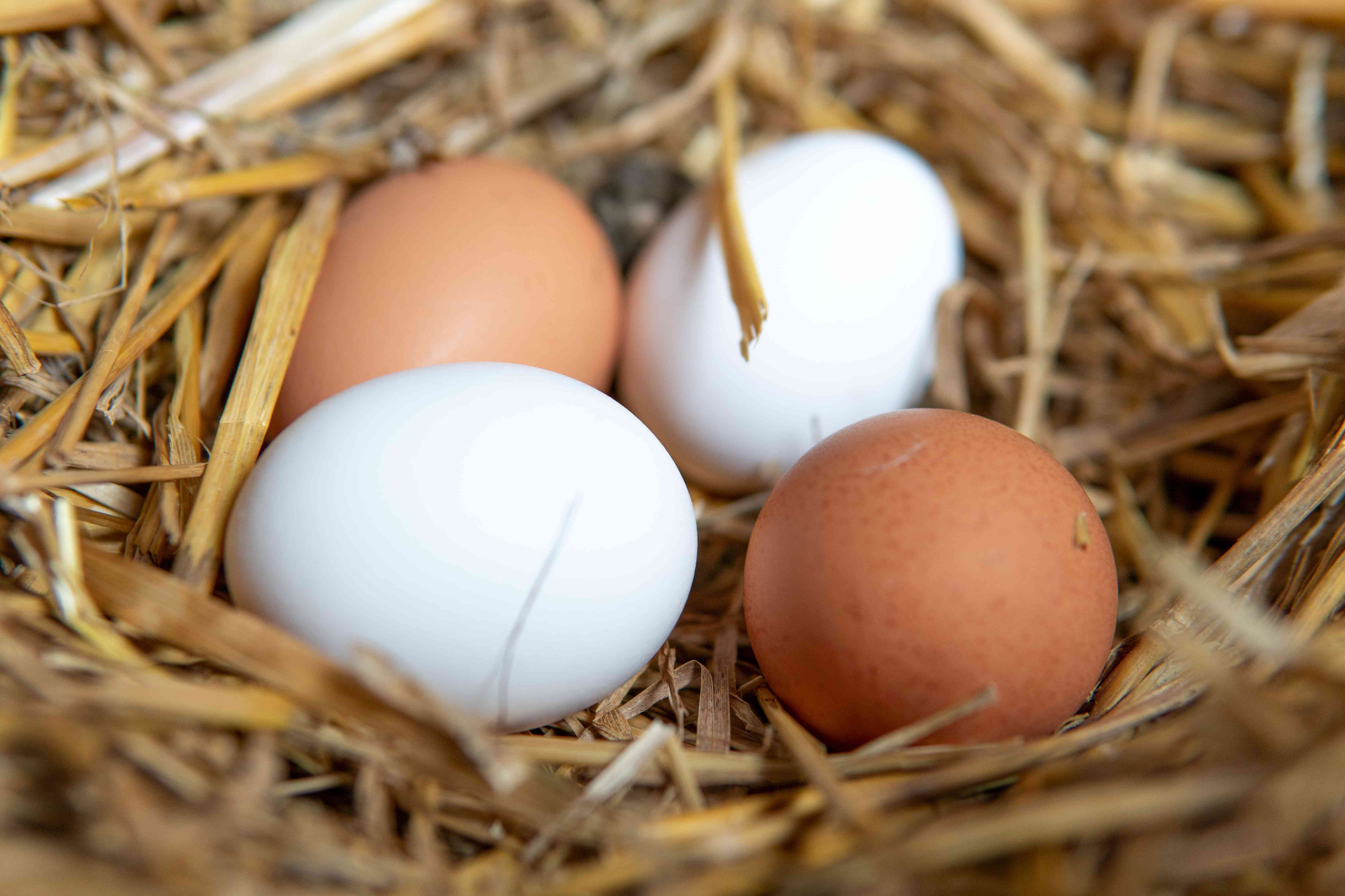 close up of eggs in hay roost
