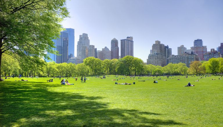 Wide expanse of green lawn in New York's Central Park with Manhattan's skyline in the distance under a clear blue sky