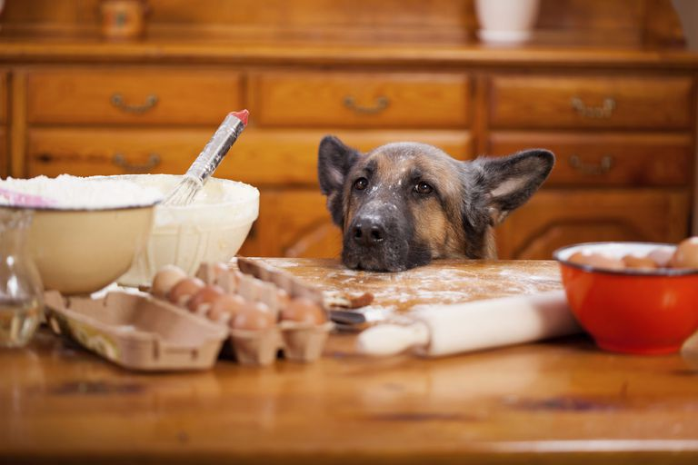 How to Make Safe Homemade Dog Food