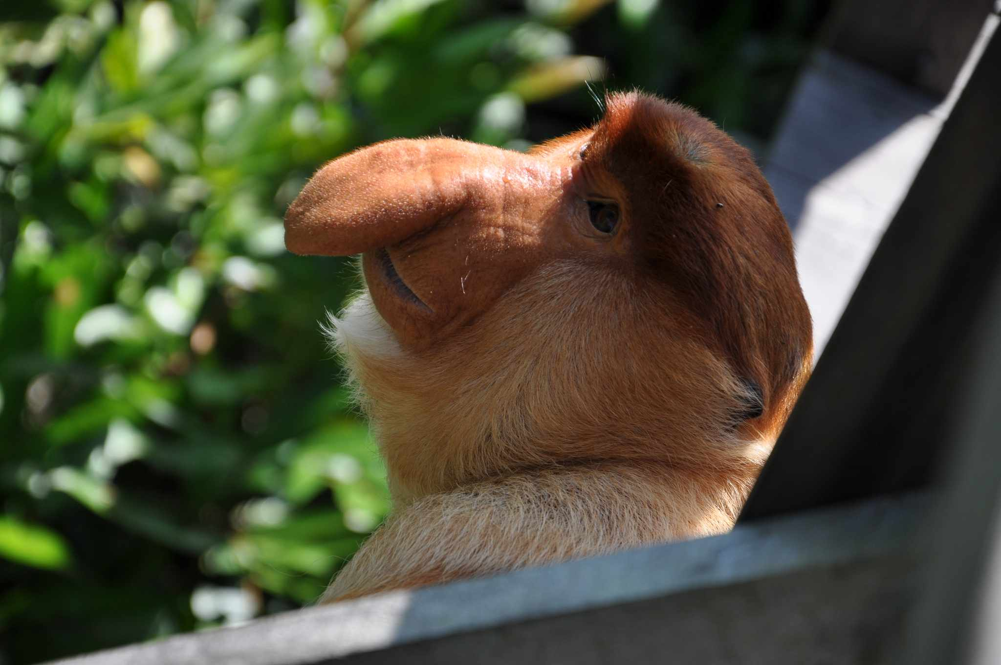 13 of the Ugliest Animals on the Planet