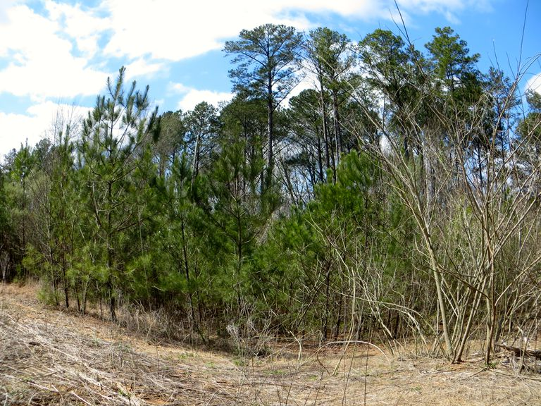Looking at an ecotone and forest succession
