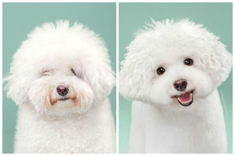 No reconocerás a estos perros después de sus cortes de pelo extremos