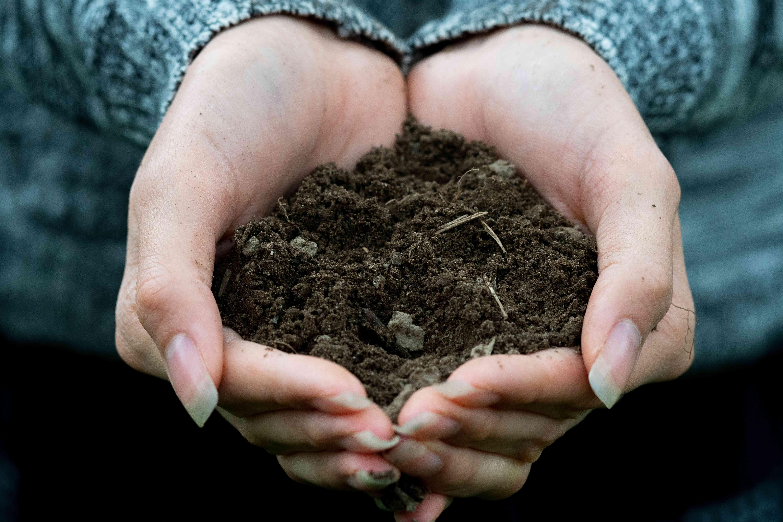 closeup woman's hands hold soil
