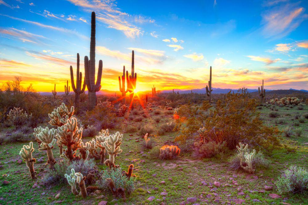 Sun setting between saguaros cactus in Sonoran Desert, Arizona