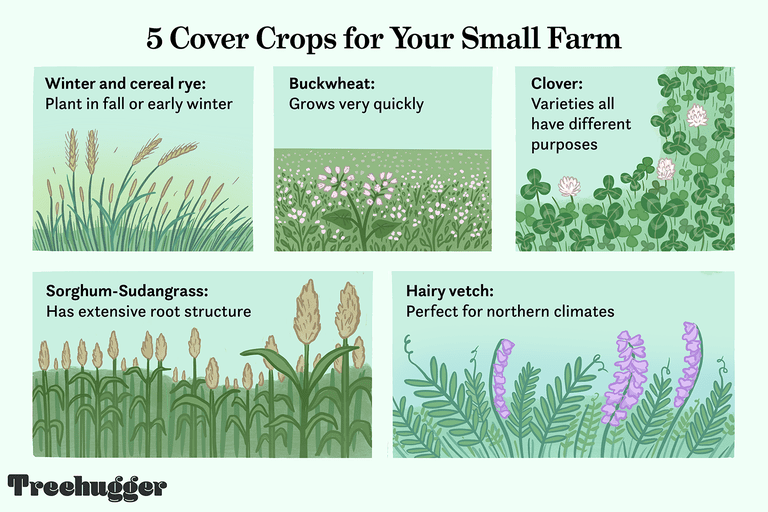5 cover crops version 2