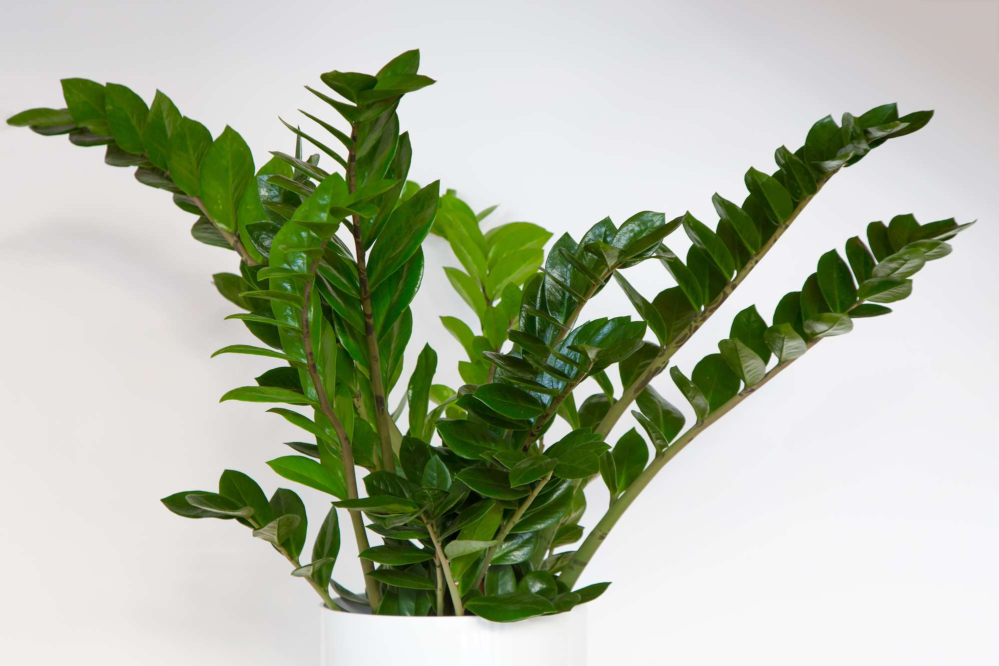 8 Of The Easiest Houseplants To Care For