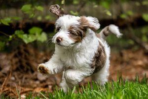 Trudy running