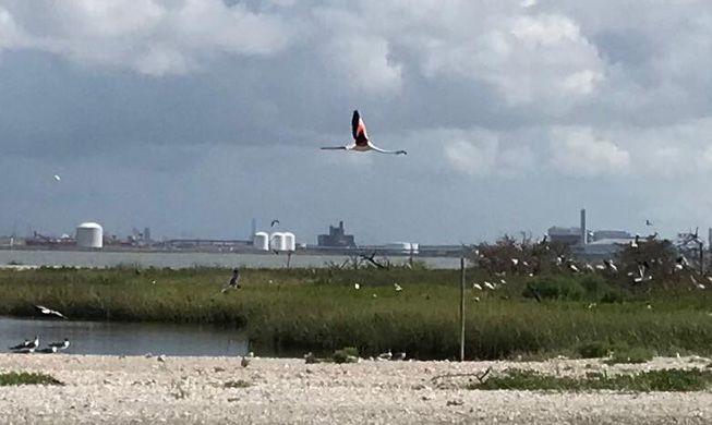 Flamingo No. 492 flies over waters of Lavaca Bay