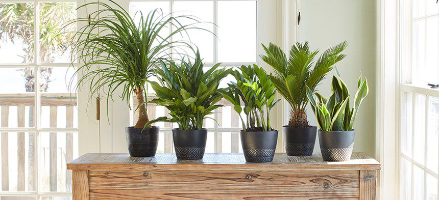 Houseplant Lovers - cover