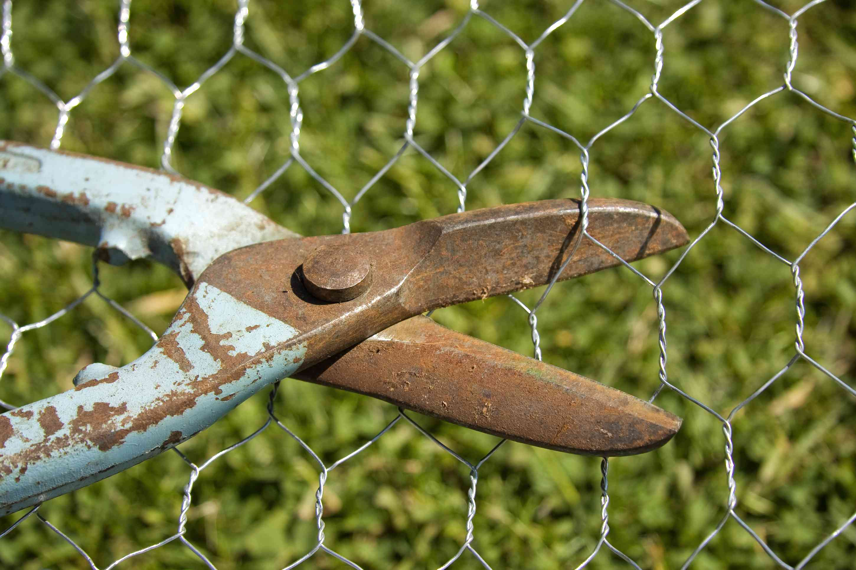 blue rusted wire cutters