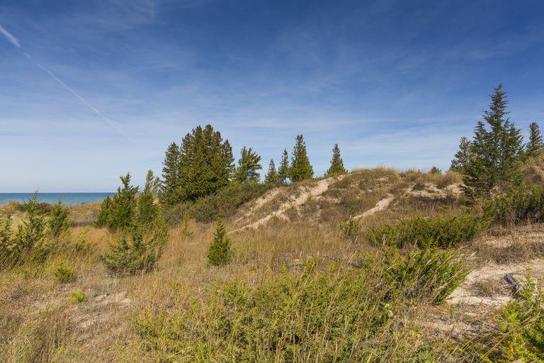 A sand dune ridge on the shore of Lake Huron