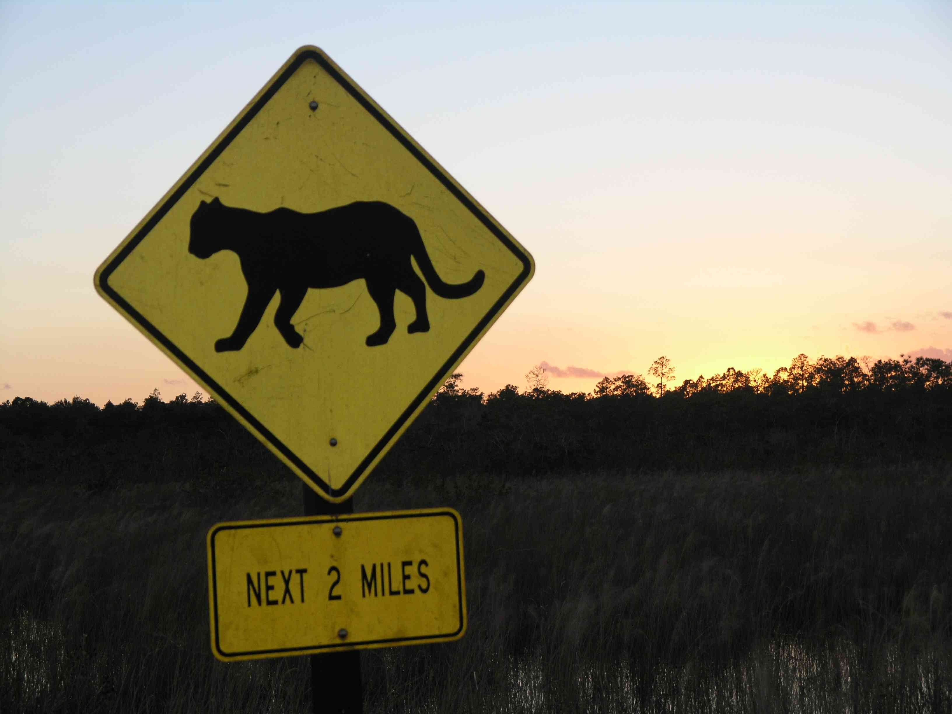 Florida panther crossing sign