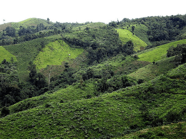 Reforested land In Yunnan Province, China