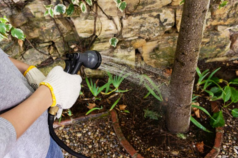 A woman with gloves watering a tree in her garden.