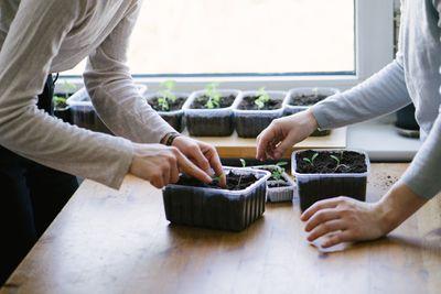 Planting seeds indoors