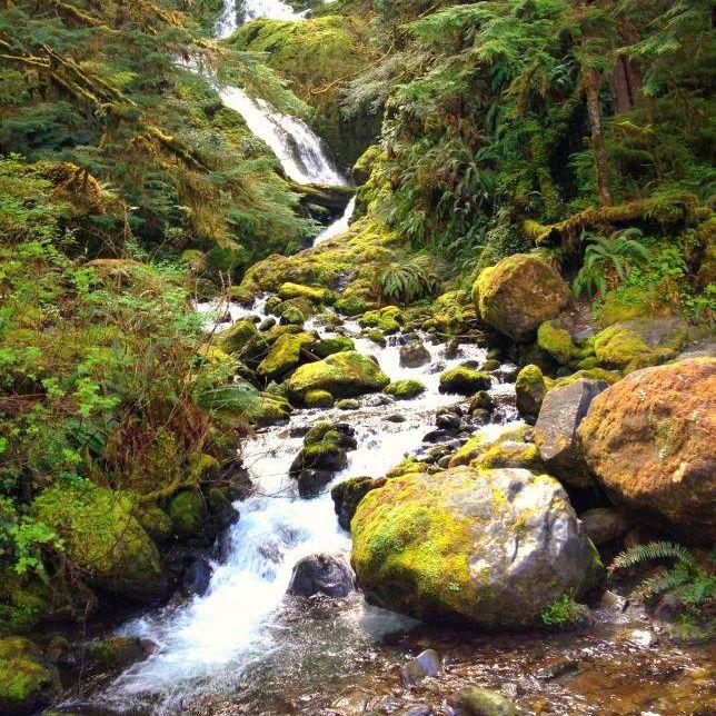 waterfall in washington state rain forest