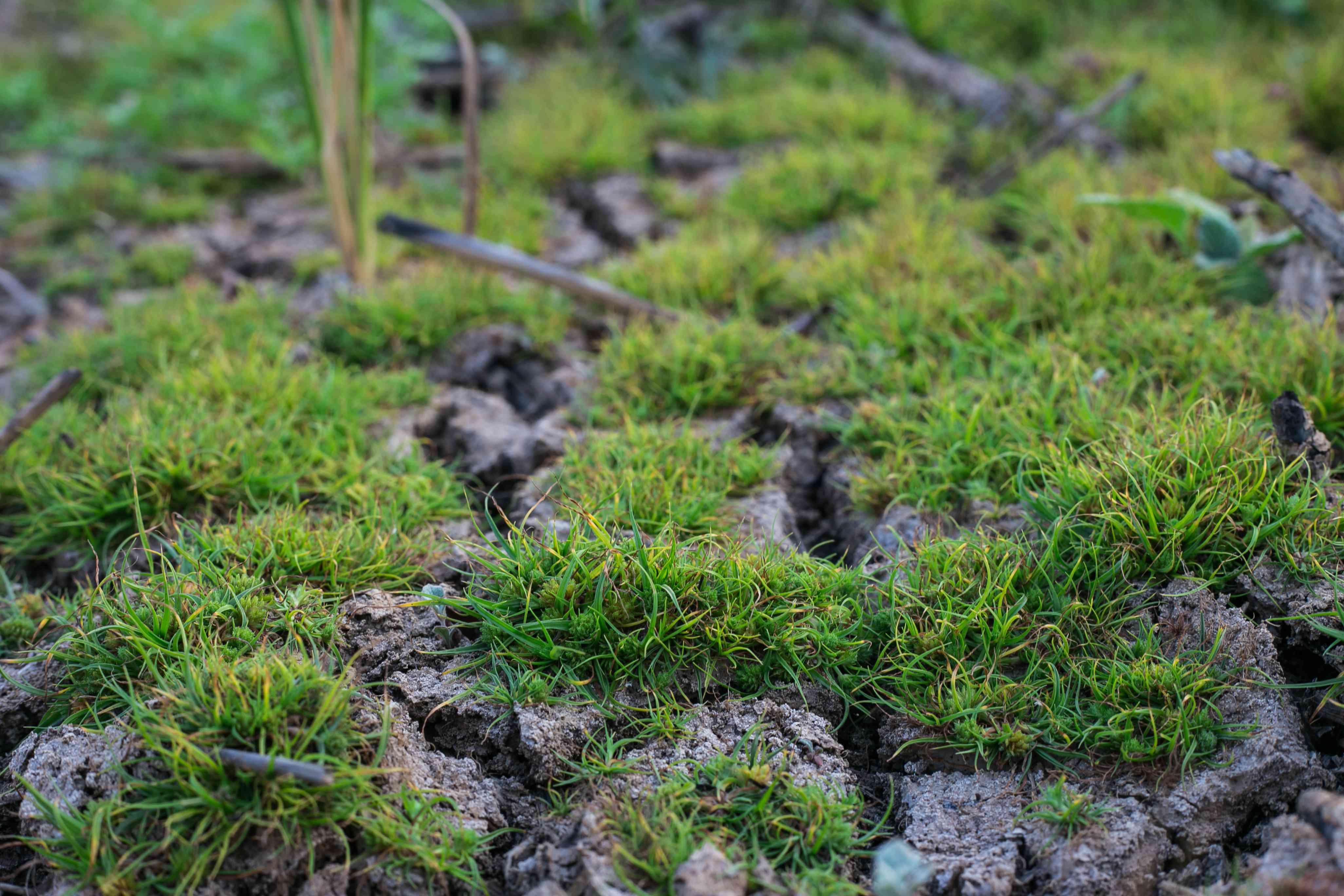 Plants growing in dry, depleted soil