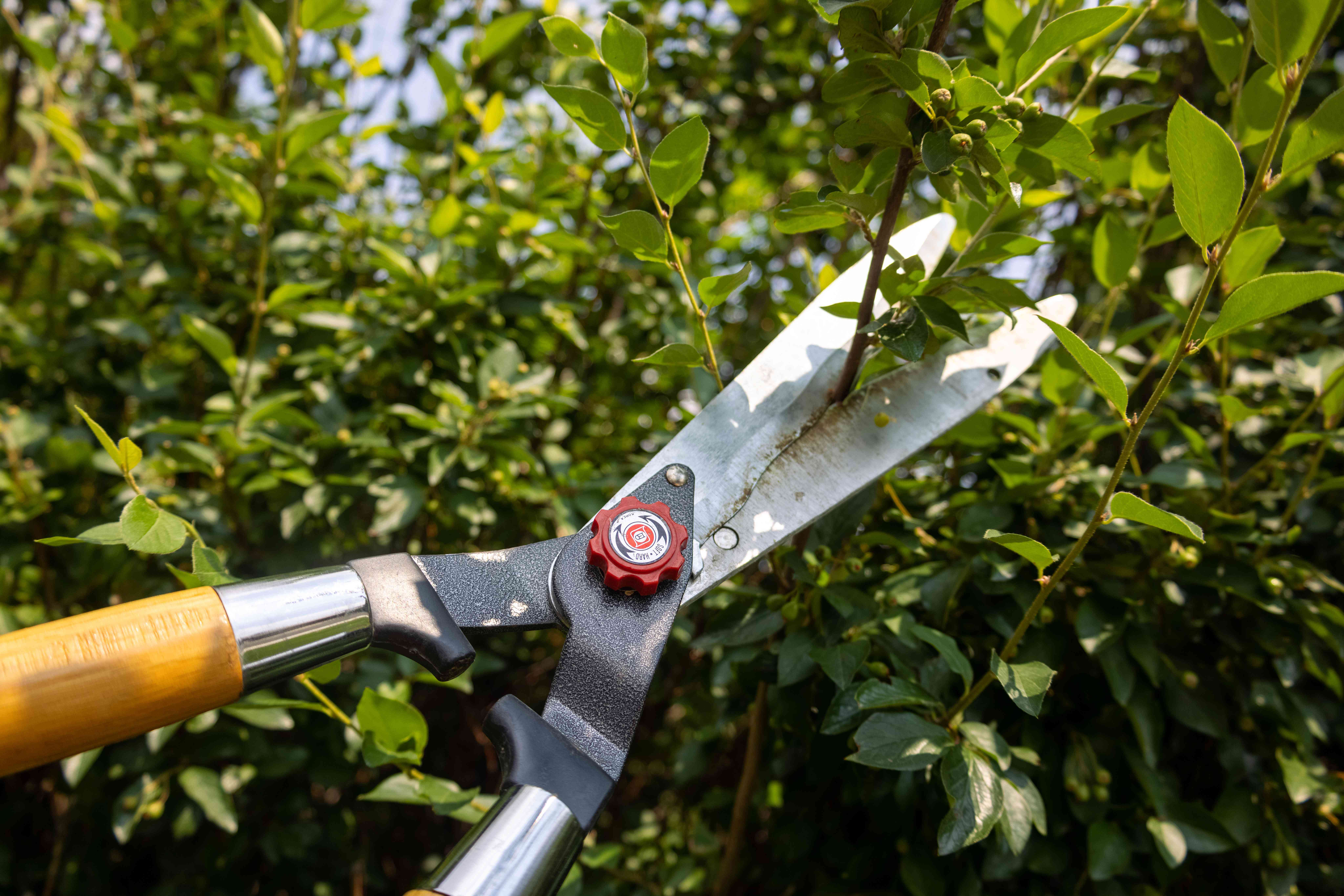 large garden clippers are used to trim outside bushes