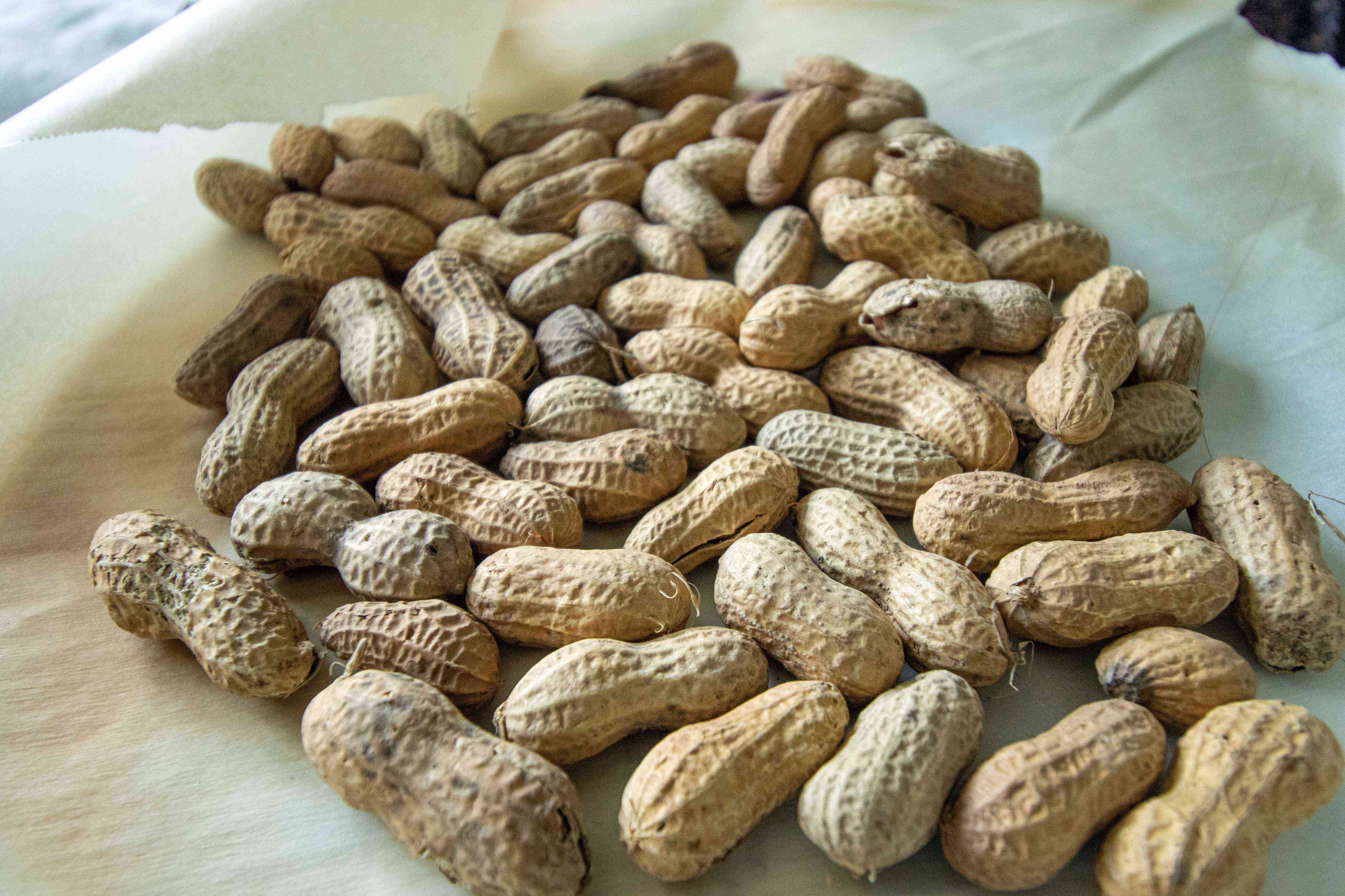 freshly harvested peanuts after being roasted, ready for storage