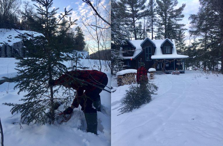 Por qué siempre elijo un árbol de Navidad real
