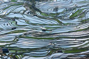 Terraced rice fields in Yuan Yang, southern China.