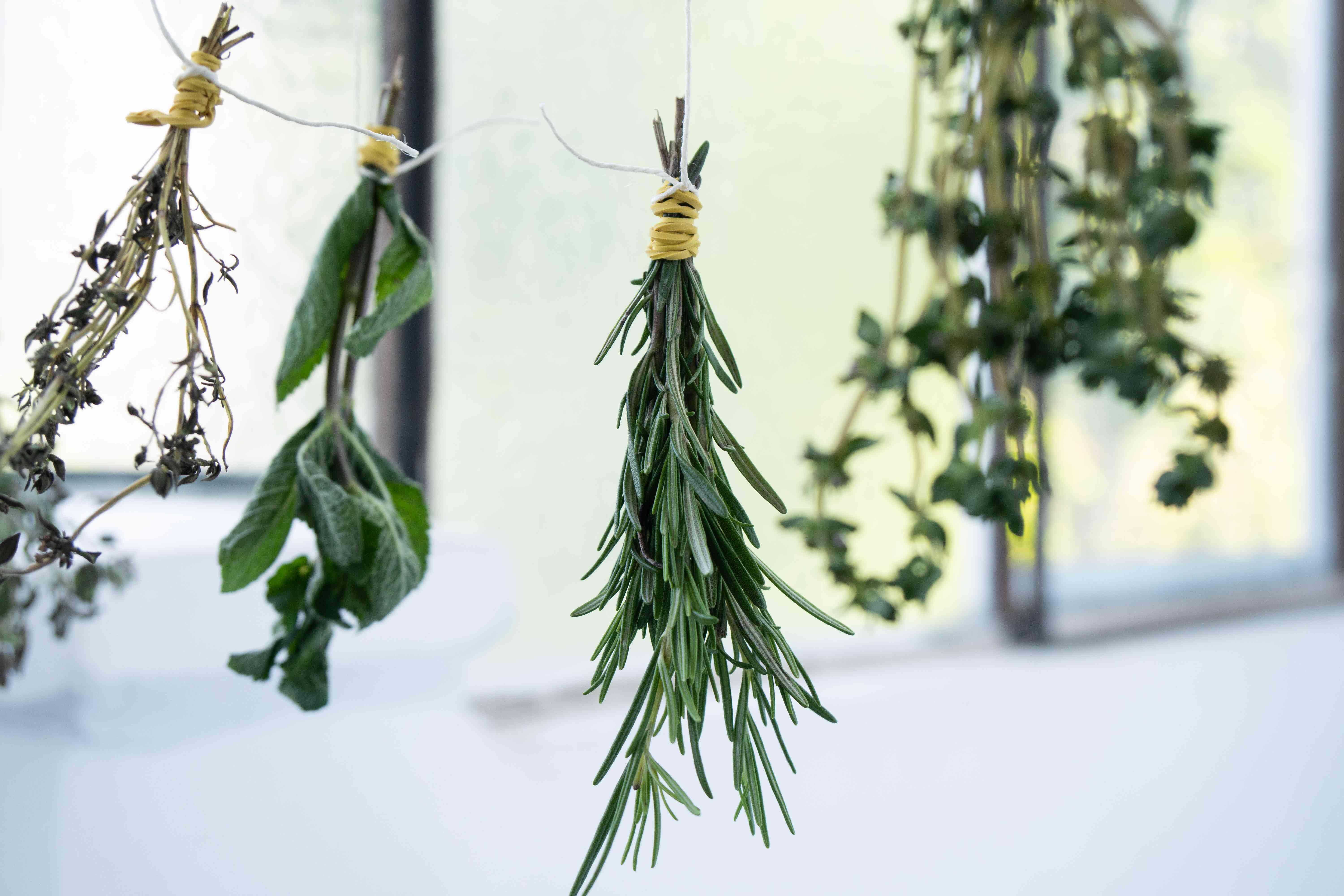 various herbs tied with twine and being dried by air by hanging