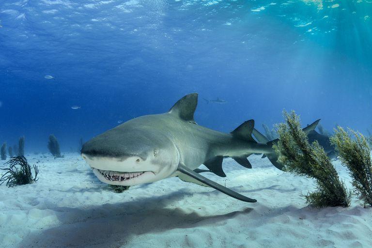 El deseo de muerte de Trump por los tiburones conduce a una avalancha de donaciones para organizaciones benéficas de tiburones