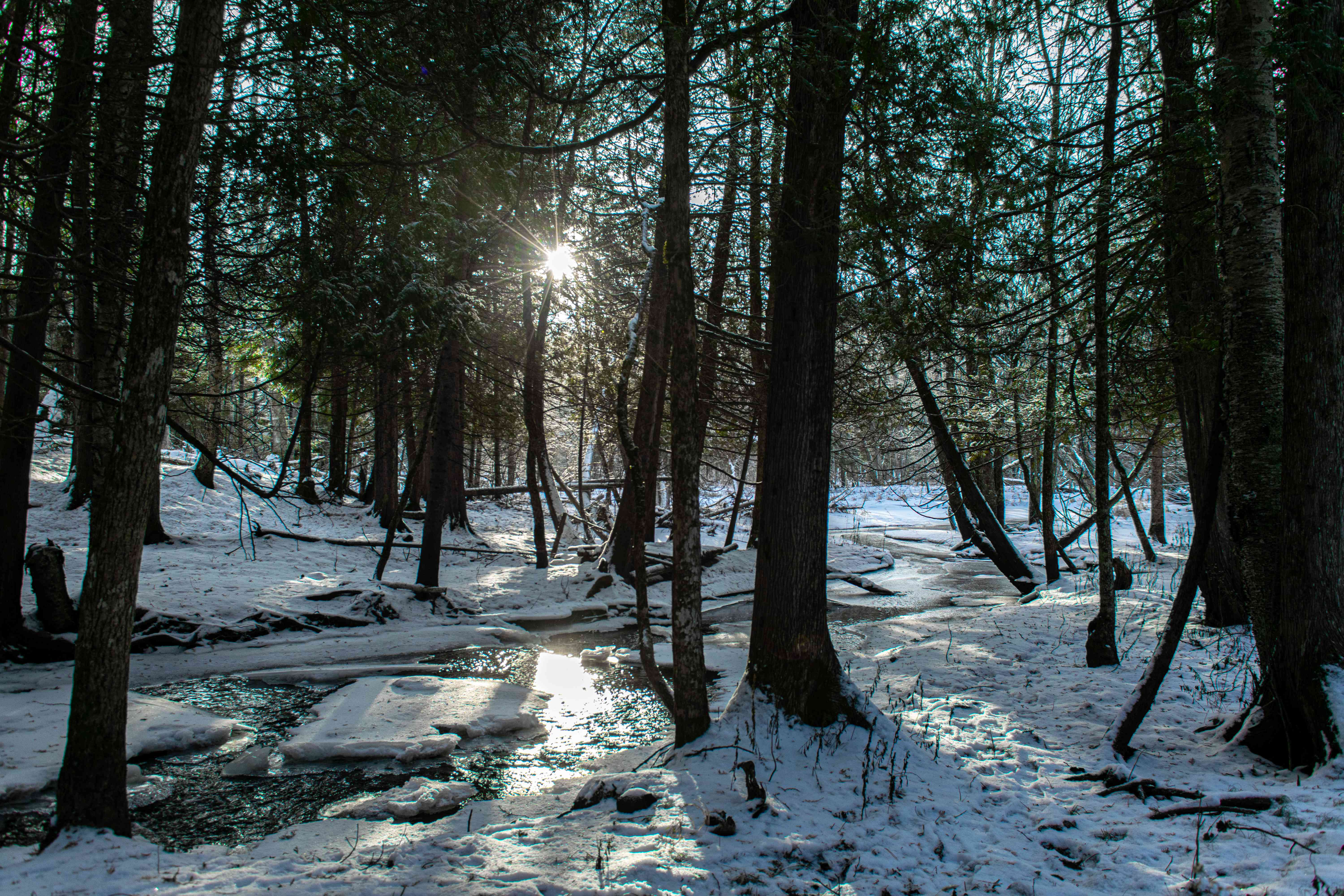 late day sun breaks through trees and snow