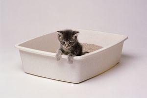 Kitten in a litter box
