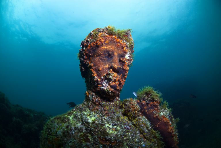 Submerged statue head covered in aquatic plants