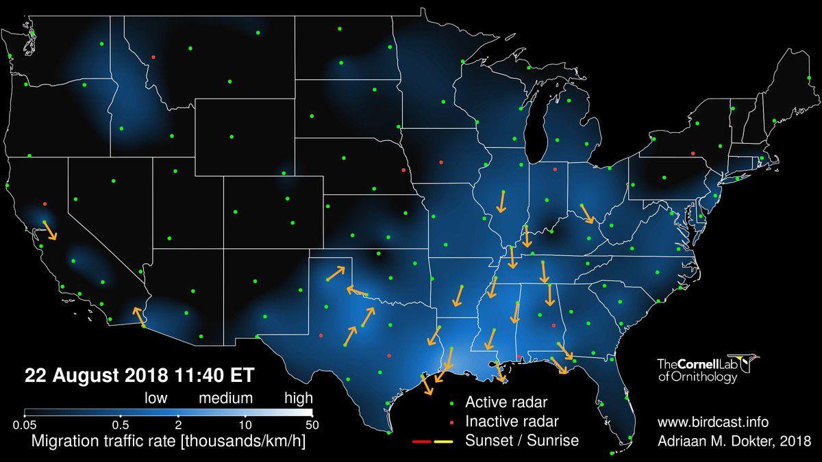 Cornell birdcast live map