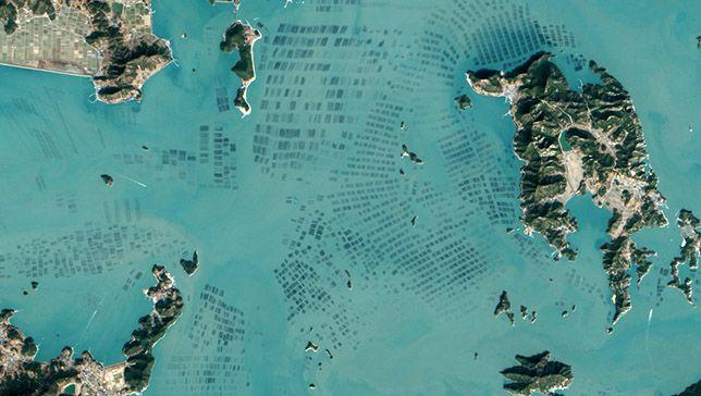 Lo que necesita saber sobre las granjas de algas de Corea del Sur