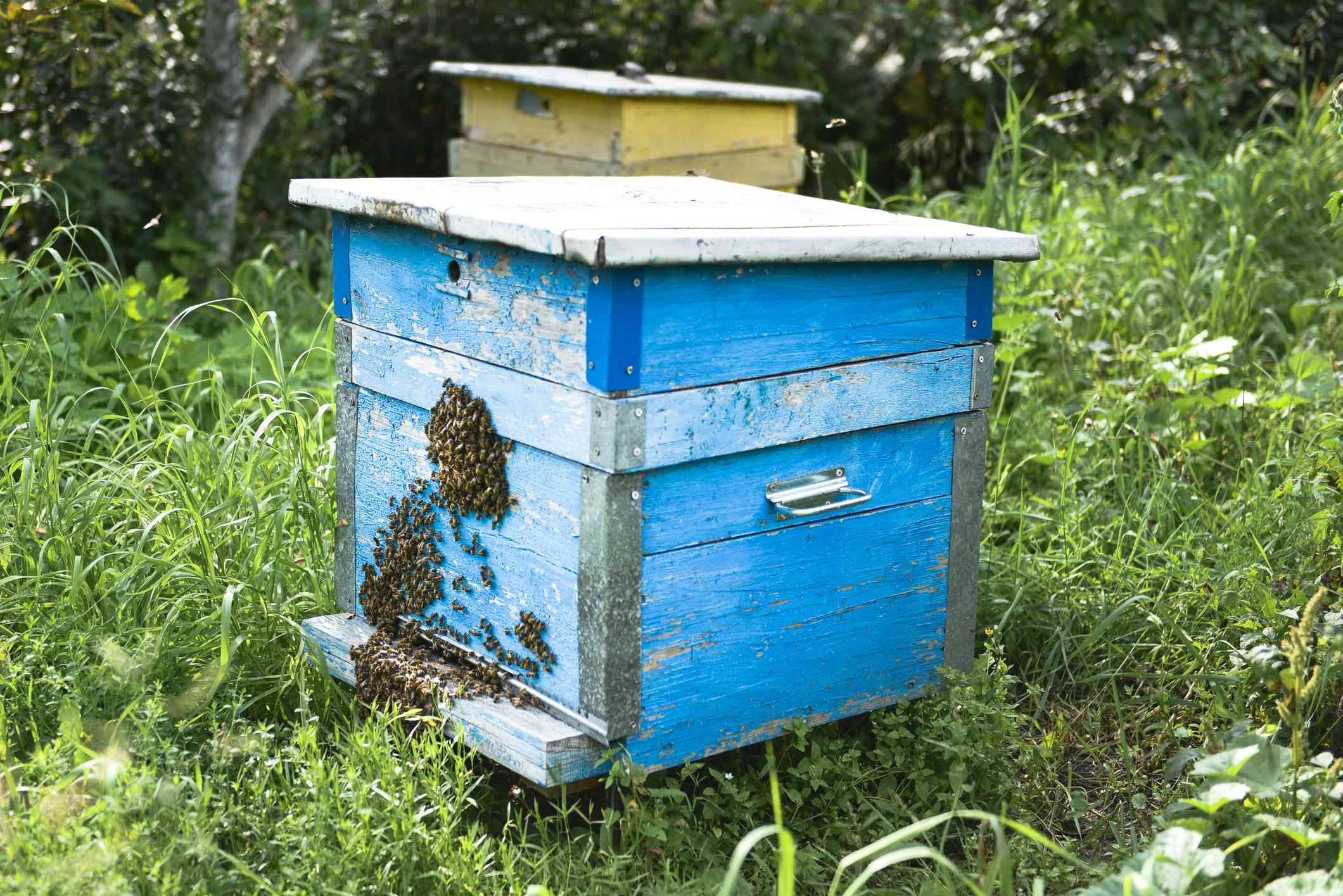 blue and yellow bee hives outside