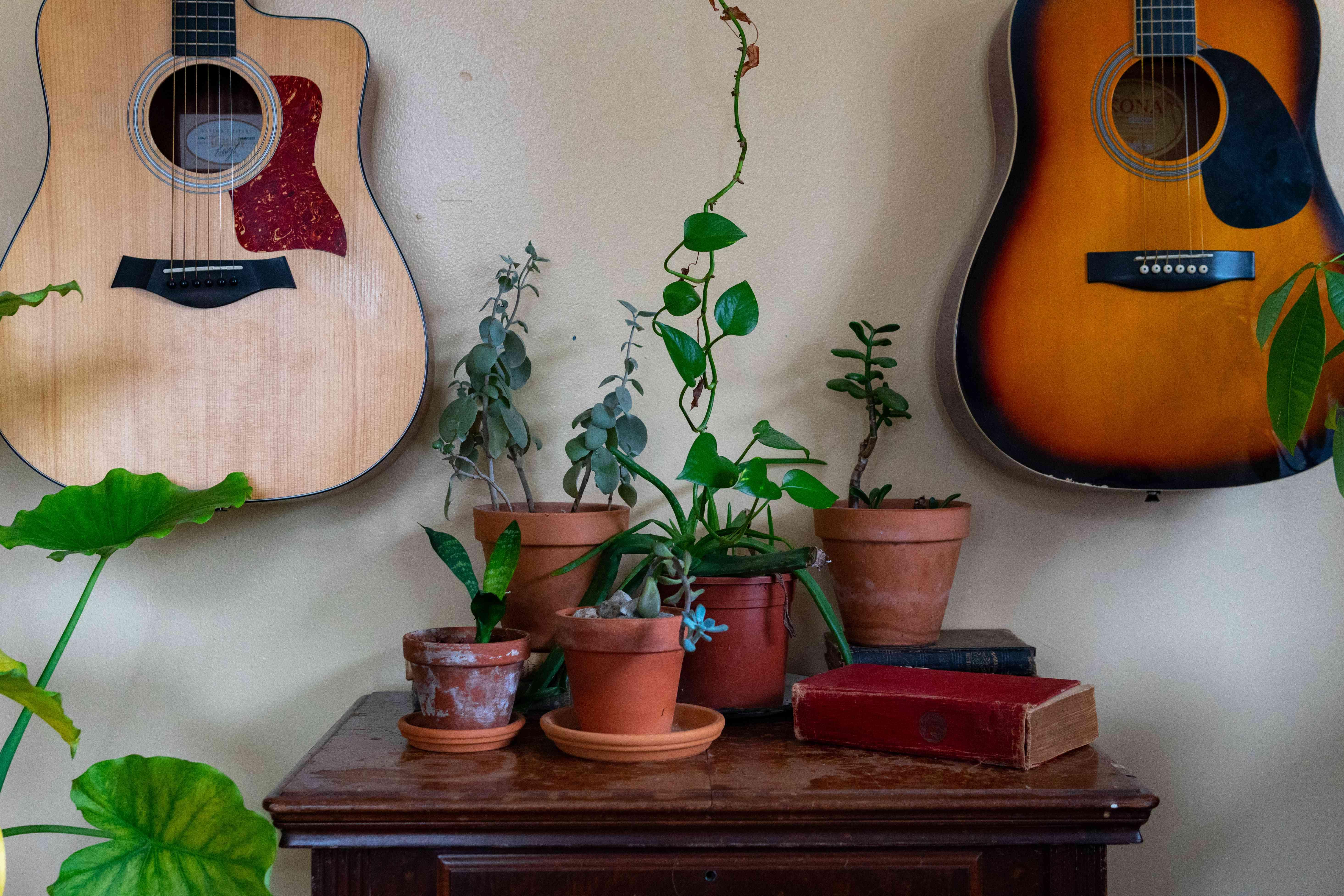 keep house plants mold free while guitars hang on wall