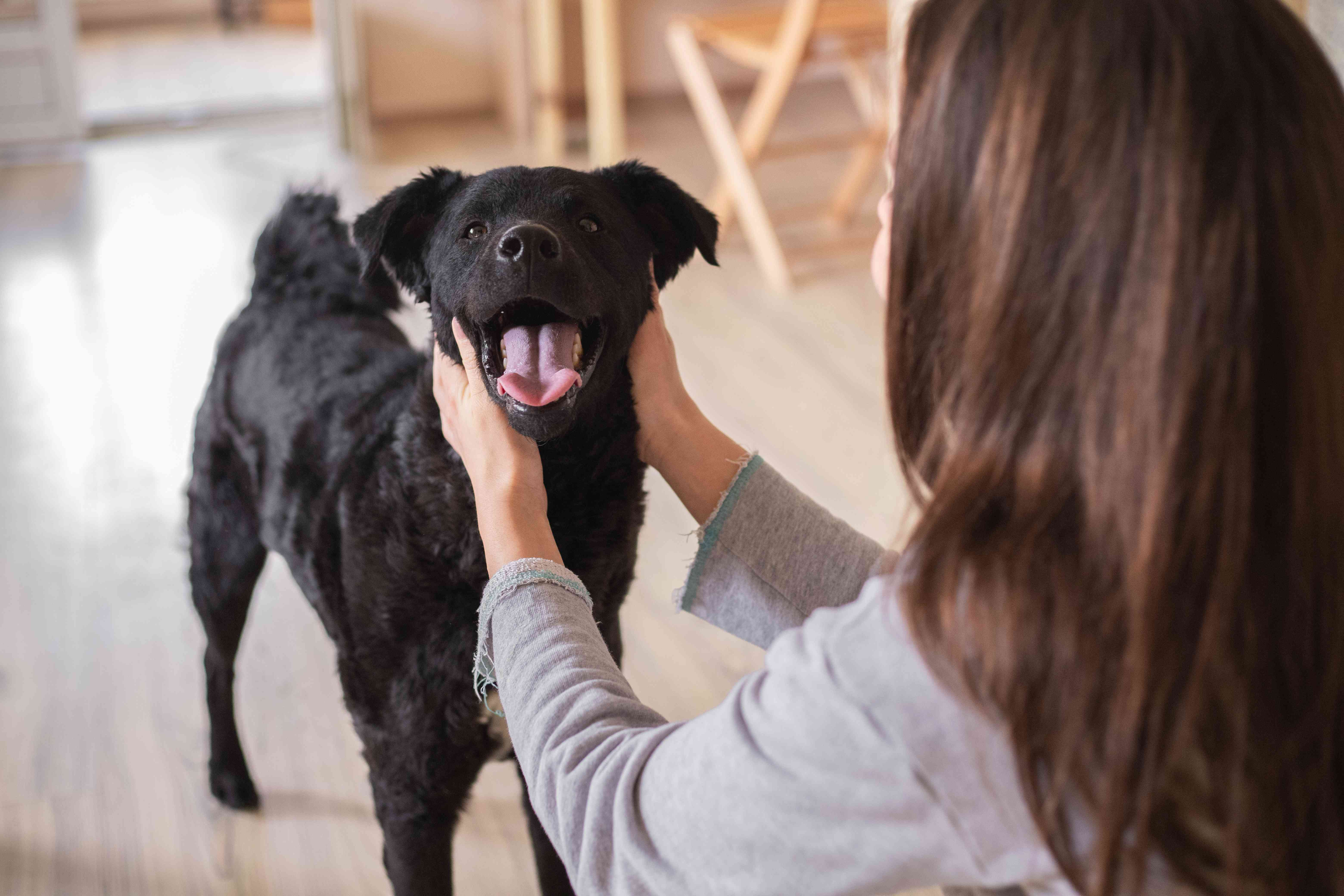 woman scratches dog's cheeks while dog opens mouth with tongue out
