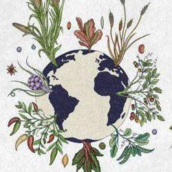 seeds of the world illustration