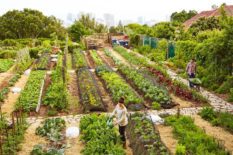 An organic vegetable garden at the edge of a city.