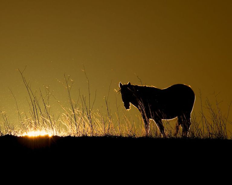 Horse in a field in front of a setting sun
