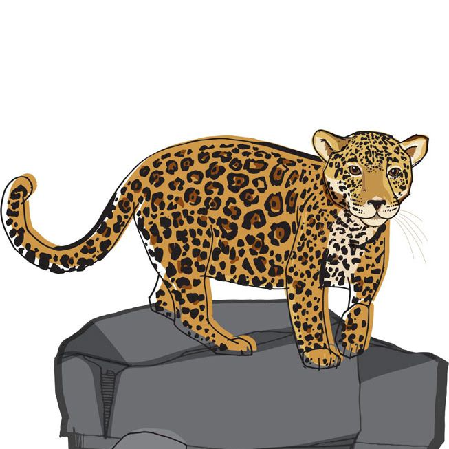 An illustration of a jaguar