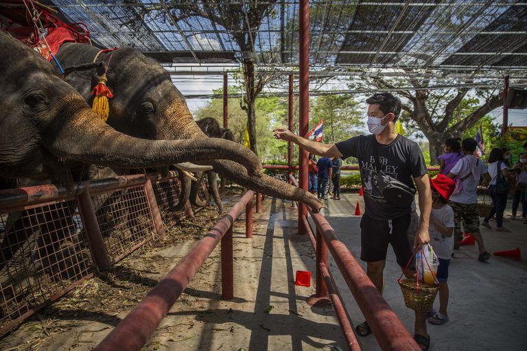 Elephants In Thailand At Risk Amid The Coronavirus Pandemics