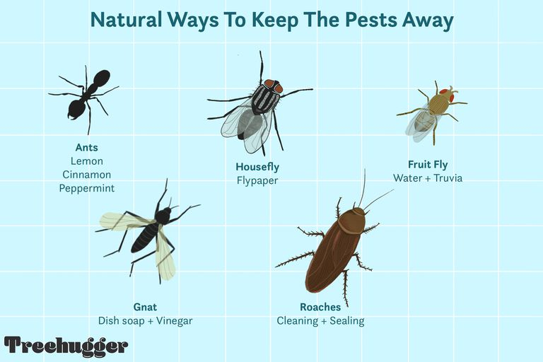 natural ways to keep pests and insects away illustration