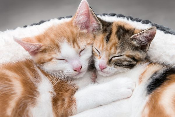 Two cute kittens in a fluffy white bed
