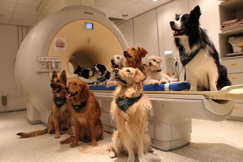 dogs in MRI scanner