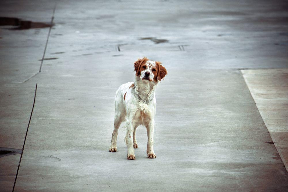 stray dog in street