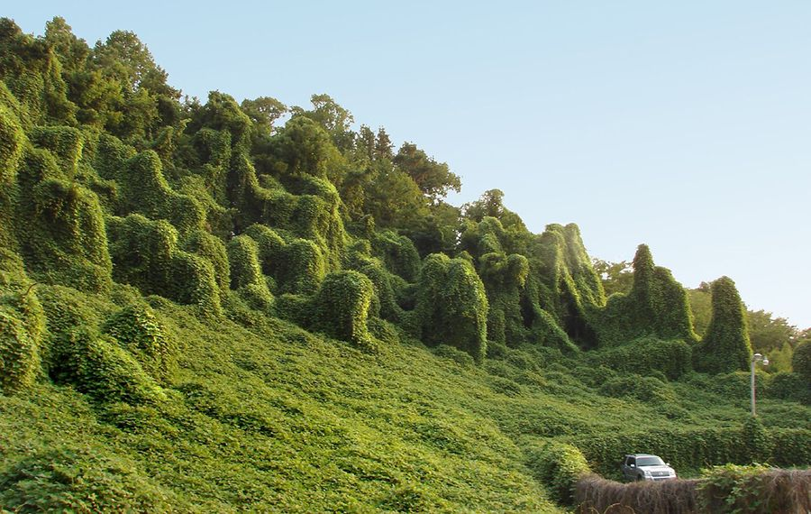 Slope of kudzu monsters
