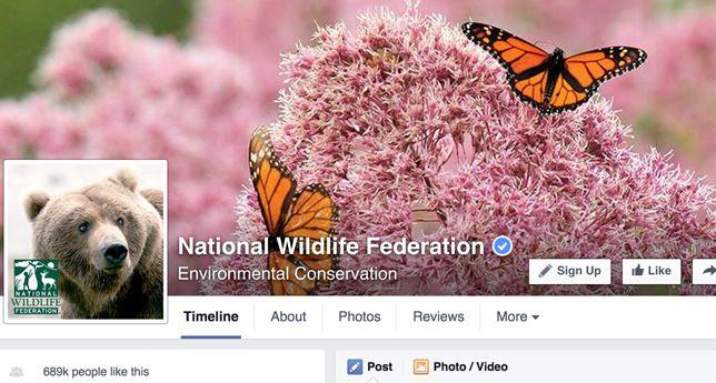 National Wildlife Federation on Facebook
